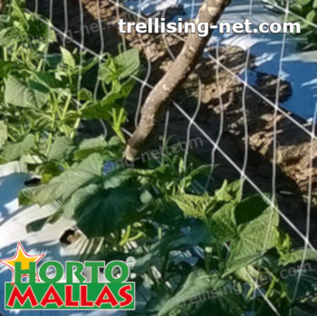 hortomallas net installed on cucumber cropfield