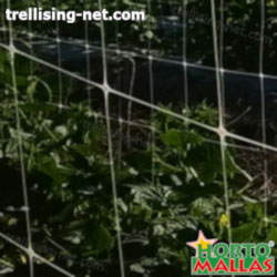 the hortomallas net used in cucumber cropfield