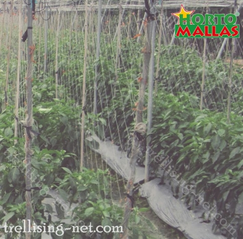 rotation of crops using the trellis net.