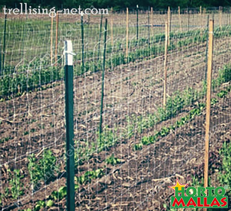 Installation of the trellising net with stakes on cropfield.