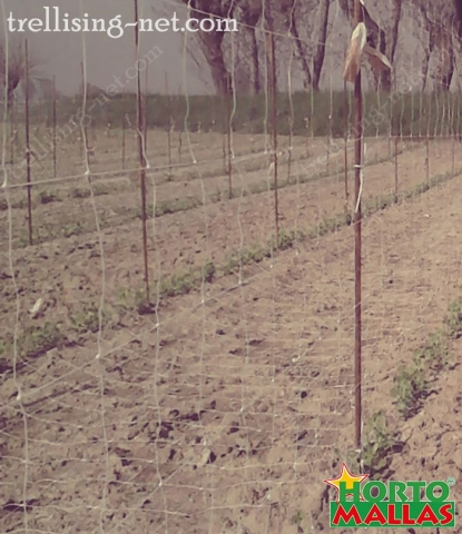 espalier trellis net installed on the cropfield for the support for crops.