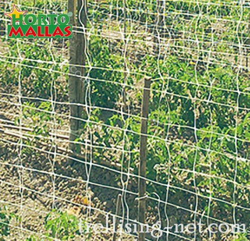 espalier trellising net installed on cropfield for protection of the crops.