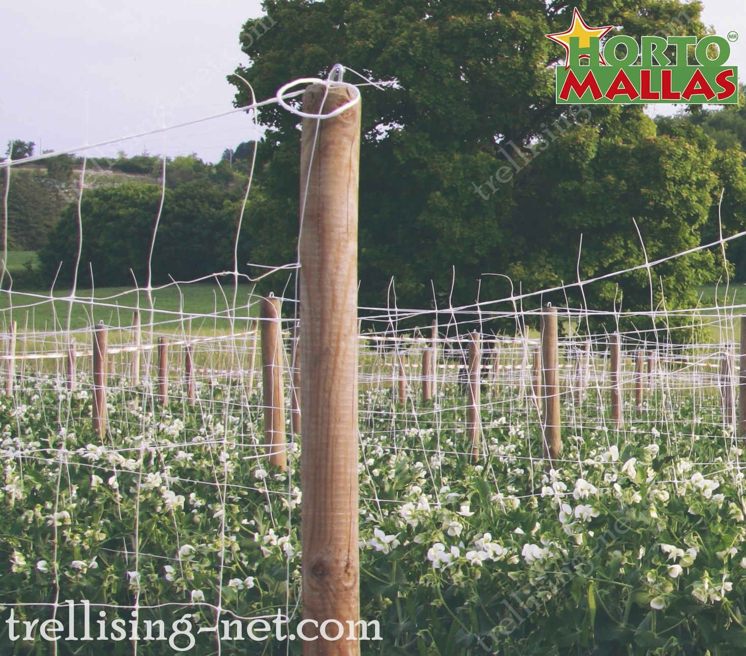 trellis net installed for the protection  of crops in the cropfield.